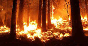 A forest wildfire