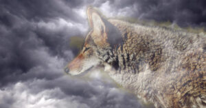Spirit coyote and cloudy sky
